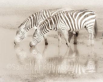 WILDLIFE PHOTOgraphy Zebra -  African Photo, Nursery Wall Art, Wall Art, African wildlife, Zebra Photo, childs room decor