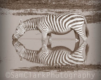 WILDLIFE PHOTOGRAPHY - AFRICAN Photography, African Wildlife, Nursery Art, Zebra Reflection, Wall Art, Nature Photography
