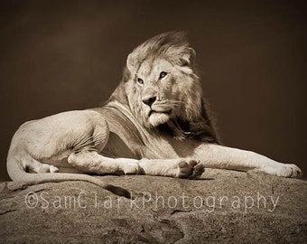 WILDLIFE PHOTOGRAPHY -  Animal Photography, Safari Animals, African Photography, Nature photography, Wall Art, LION Photo