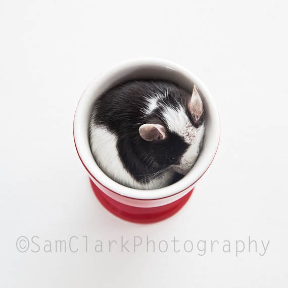 Egg Cup Baby Mouse - Cute Nursery Art, Mouse Photography, Baby Mouse in Red Egg Cup, Pet photography, animal print
