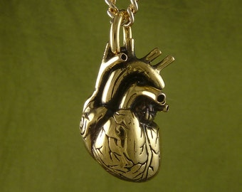 "Valentines Day Heart Anatomical Heart Necklace 24 Karat Gold Plated Bronze Heart Pendant on 24 "" Gold Plated Chain - Valentines Gift"