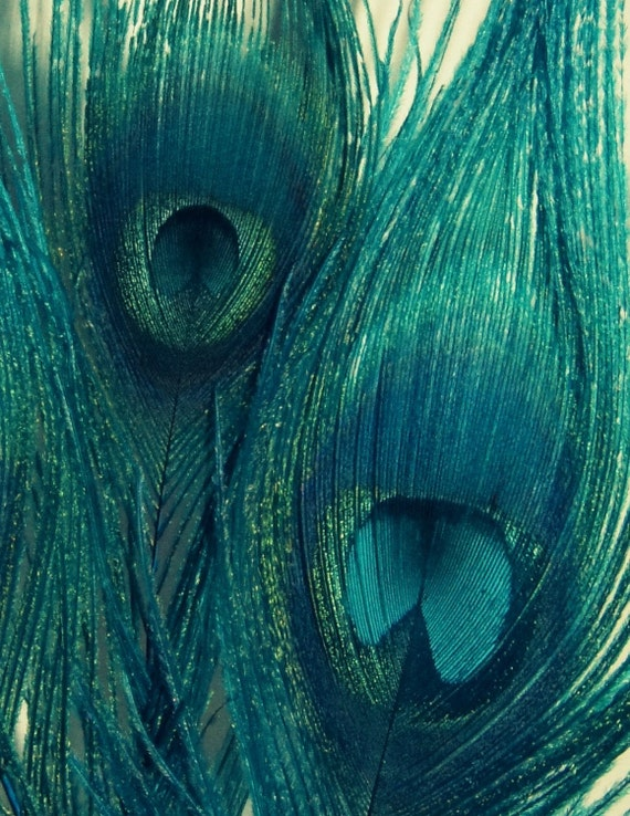 Teal Peacock Feathers - Bird Feathers, Blue Green Navy, Home Decor - Fine Art Photography, Metallic Finish -  11x14