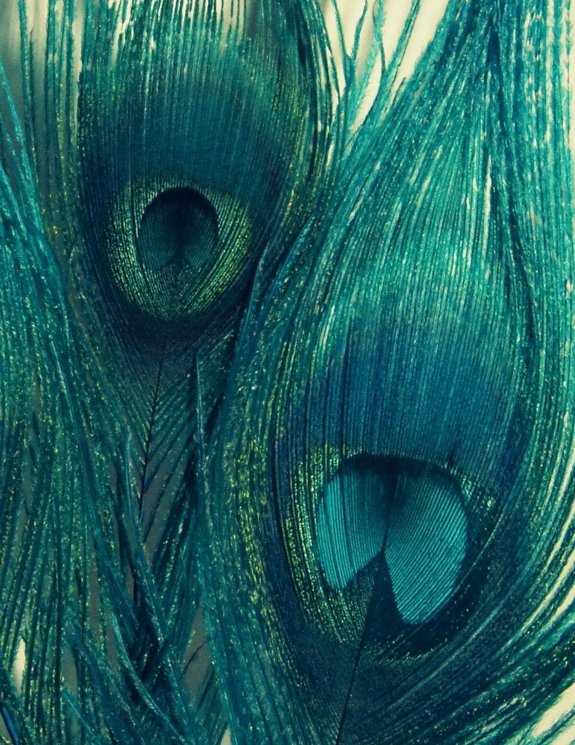 Teal Peacock Feathers Bird Feathers Blue Green Navy Home