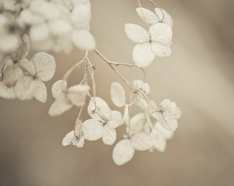 Flower Photography, Botanical Art, Nature Photography, Beige Wall Art, Garden Print, Hydrangea Prints, Slowly Fading