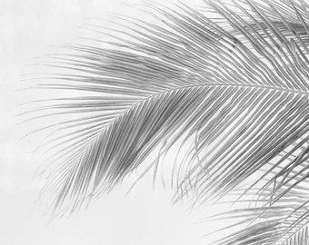 Palm Tree Photography, Beach Prints, Black and White Wall Art, Botanic Prints, Beach Art, Nature Photography, Romantic Prints, Palm