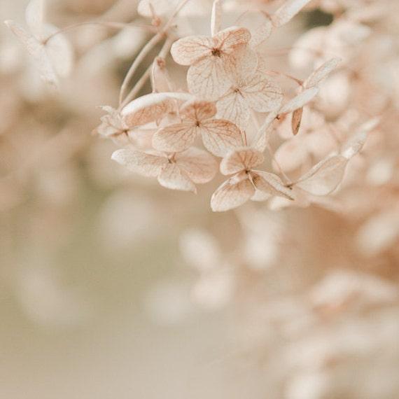 Floral Fine Art Print, Nature Photography, Hydrangea Blossom Print, Pastel Flower Print, Pink Wall Decor, Botanical Art, Softly Fading