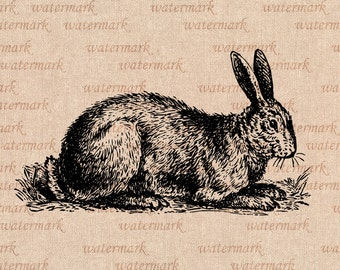 Rabbit - Digital Image Download Sheet   -    Transfer To Pillows ,Burlap Bag, or Print on paper  No129