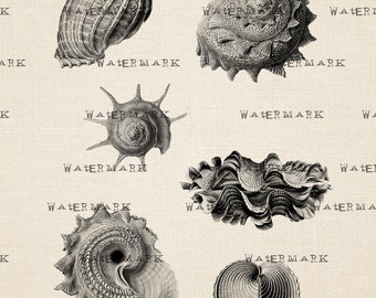 Digital Image Download Sheet -Marine life, ocean, seashells - Transfer To Pillows , Tote Bag, or Print on paper
