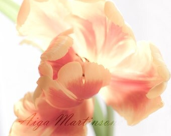 Spring tulips bloom,  Orange, yellow  flower, sunshine   - Digital Download Nature Photographs, fine art, for print to paper, greeting cards