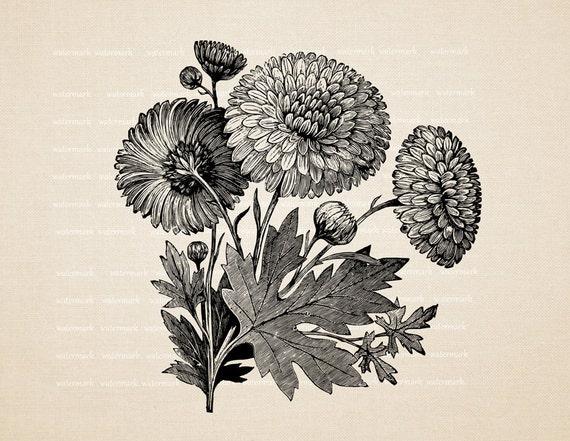 Marigold  blossom  -  Digital Image Download Sheet, Transfer To Pillows ,Burlap Bag, or Print on paper, No 277