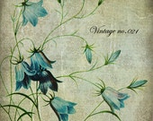 Etsy Banners - Etsy Shop Banners - Bellflower On A Vintage Paper Etsy Shop Set