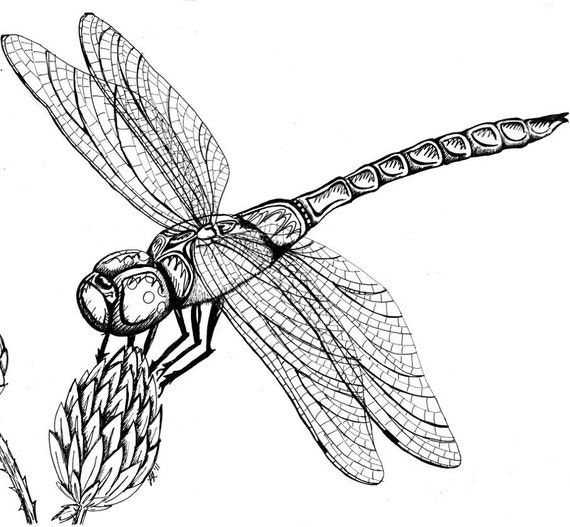 Line Drawing Dragonfly : Items similar to dragonfly on milkweed original pen ink