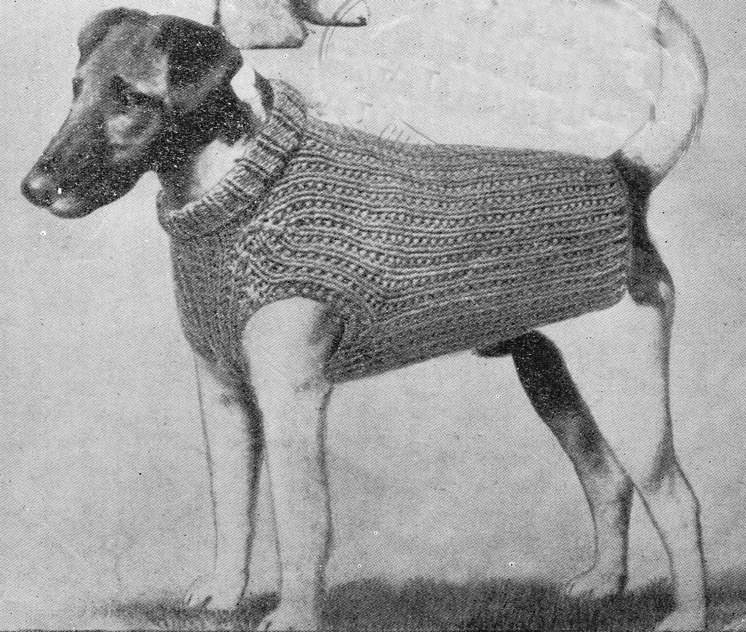 Dog Sweater Knitting Pattern Vintage 1950s Very Smart PDF