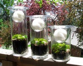 ON SALE:  Three Candle Moss Terrariums