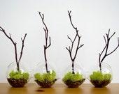 4-Globe Manzanita Forest  Moss Terrarium
