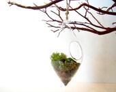 Modern Hanging Lichen Terrarium