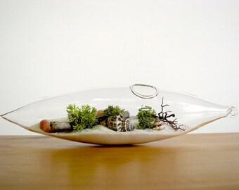Modern Beach Vessel Lichen Moss Terrarium: white, natural or black sand