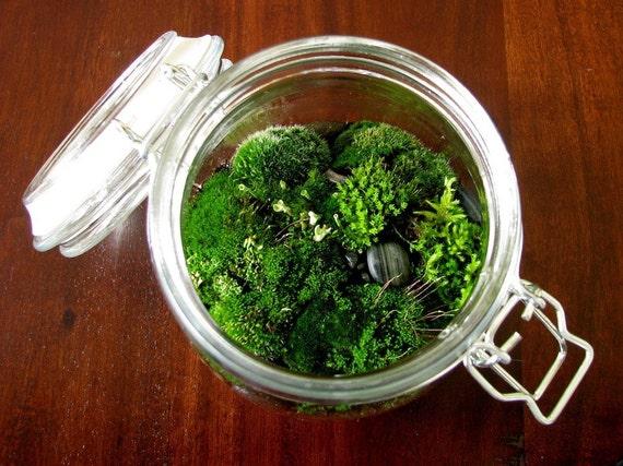 Canister Jar Moss Terrarium