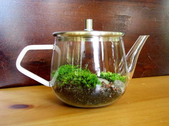SALE 20% OFF: Sweet Modern Teapot Moss Terrarium