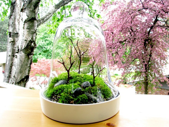 Stunning Cloche Mountain Manzanita Trees Moss Terrarium