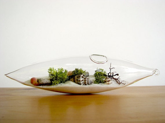 Modern Beach Vessel Lichen Moss Terrarium: white or black sand