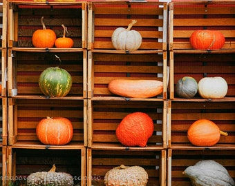 Farmer's Market Line Up -  An Autumn Collection of Pumpkins and Squash Fine Art Photography Print