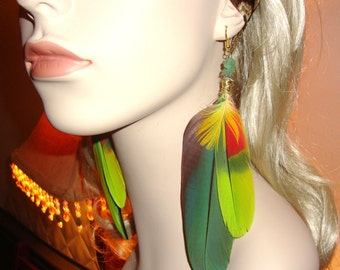 rare blue faced macaw parrot feather earrings