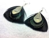 Iridescent Pheasant Feather Earrings