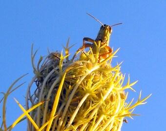 8x10  curious grasshopper on flower