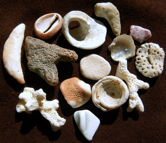 Hawaiian shells, coral, sea pottery for jewelry, collection