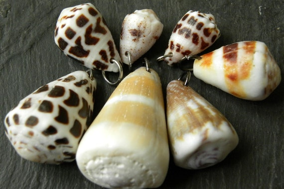 Drilled sea shells for jewelry, ready to use, mixed sizes with jump rings, 7 pcs