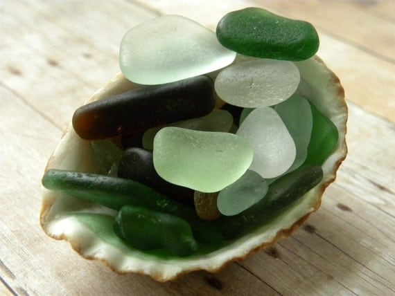 Sea shell filled with sea glass from Hawaii, mixed 24 pieces for crafts,  jewelry quality