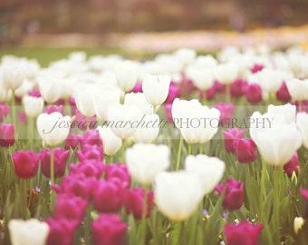 Tulip Art, Tulip Print, Flower Art, Flower print, Wall art, Canvas Art, framed art, nature photography, pink tulips, art prints