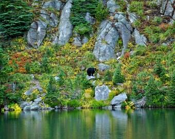 Bear Across Lake Eunice Photograph 8x10