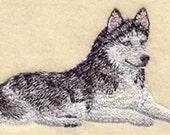Resting Husky Embroidered Flour Sack Hand/Dish Towel
