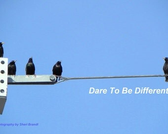 "Dare To Be Different - 20"" x 30"" Poster Original Poster Photography"