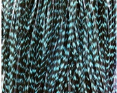 """6 REAL long skinny thin feather hair extensions Turquoise teal grizzly 7""""-12"""""""