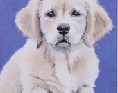 Golden Retriever Pup: 5 x 7 acrylic painting on canvas board