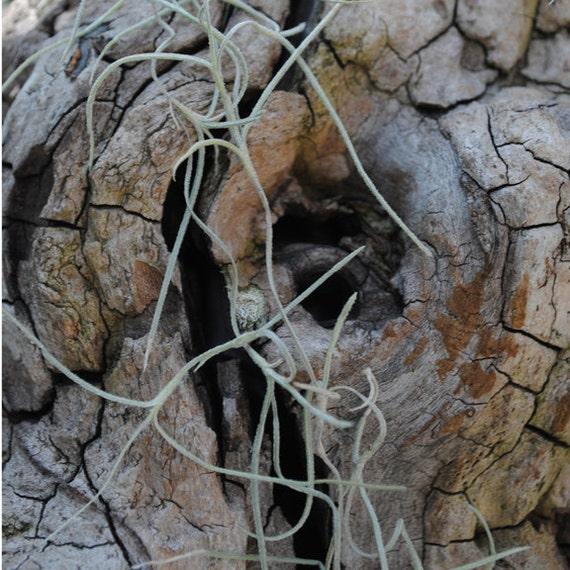 Tree bark, rough, textured bark, original signed Fine Art photo giclee print, Nature photography, Photography print, Wall art print