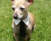 Black Interchangeable Dog Tie & Collar Wedding Set