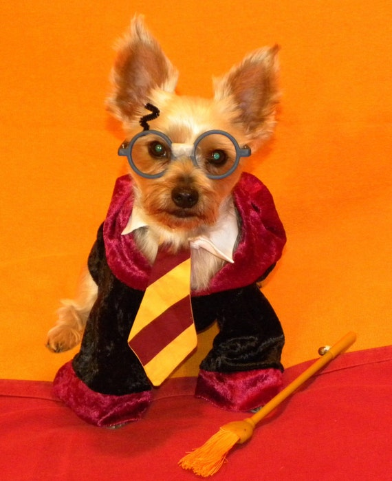 Dog Harry Potter Costume. Harry potter dog costume golden retreiver barkpost dogs, best harry potter dog costume ideas on pinterest harry, best harry potter dog.
