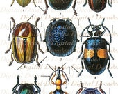 Vintage Beetle Illustrations -  Multicolor Insects Bugs Science Specimen Mount Entomology Nature Creepy Crawlers - Digital Instant Download