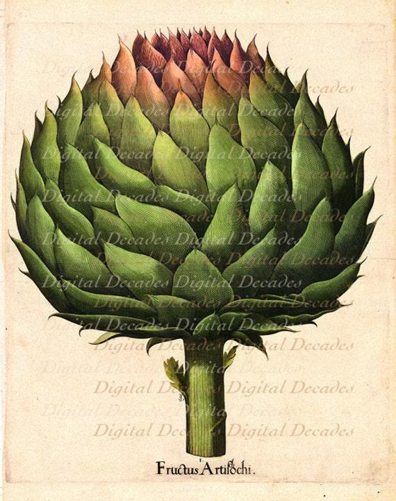 Vintage Illustration - Artichoke Vegetable Kitchen Food - Laser Printed Reproduction