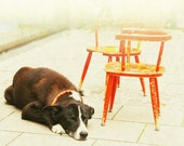 """100% of Proceeds Donated to Best Friends Animal Society, Dogtown Sanctuary - Photography 8x10"""" Print """"Sidewalk Dog in Munich"""""""