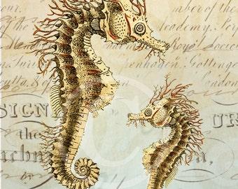 Seahorse Art Collage Print - 8 x 10 - Seahorse Collage 1