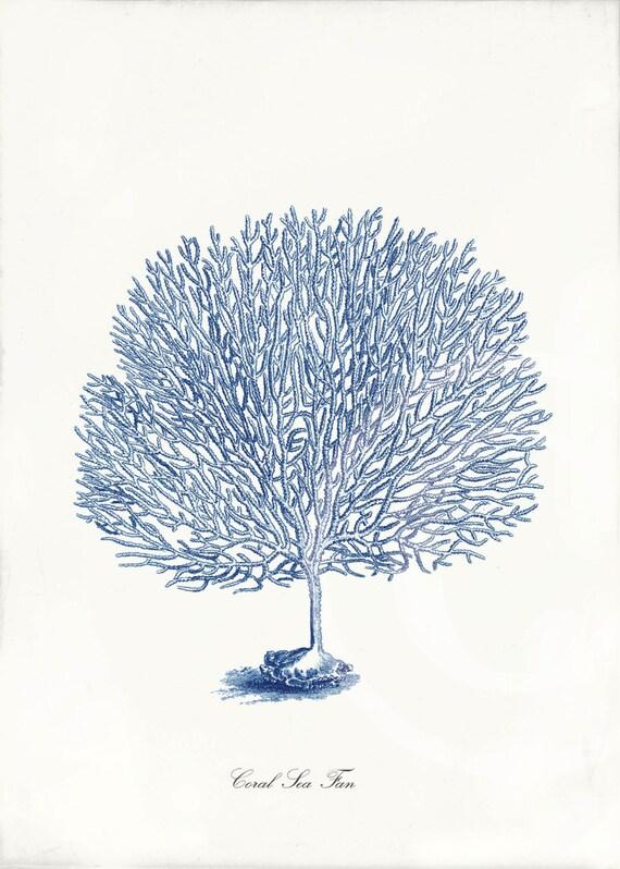 Blue Coral Art Print 5 x 7 Natural History Sea Fan Blue
