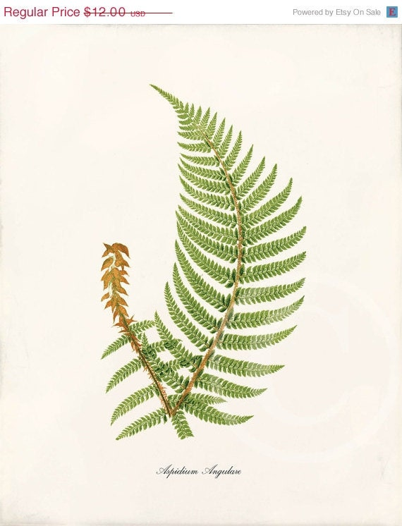 Fern Pictures Art Antique Fern Art Print 8x10