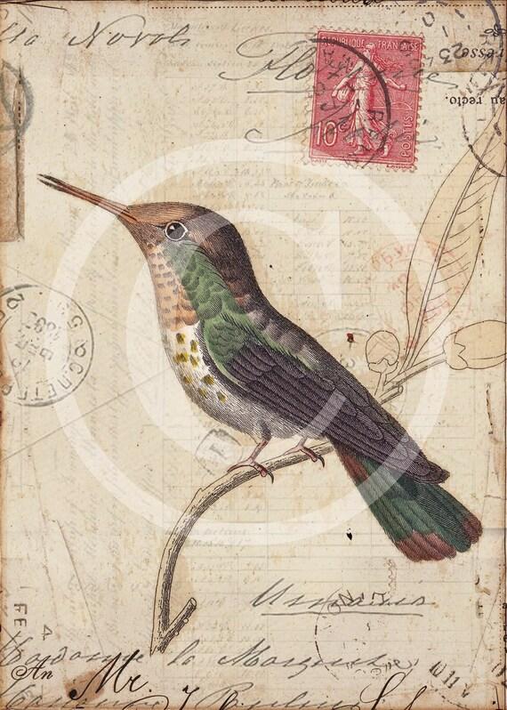 Vintage Hummingbird Collage Print  - Trochilus Petasphorus - Home Decor - Wall Art