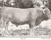 Bull no.2 etching