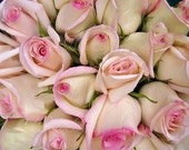 White Rose Bouquet Edged in Pink Note Card -  Petal Pink Summer Blossoms, Bridal
